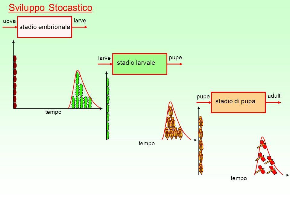 Sviluppo Stocastico stadio embrionale stadio larvale stadio di pupa