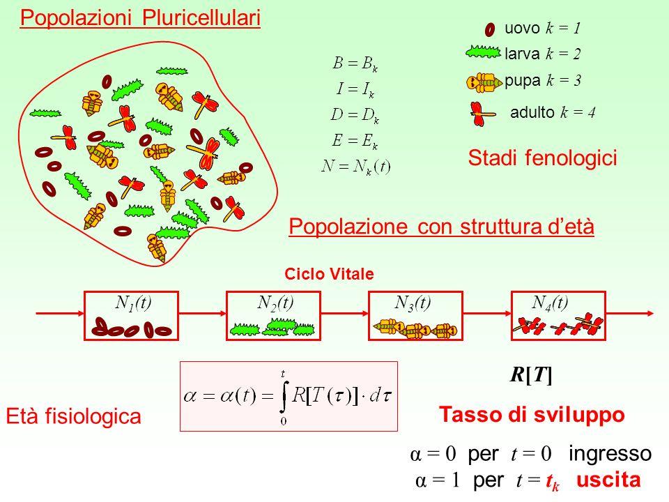 Popolazioni Pluricellulari