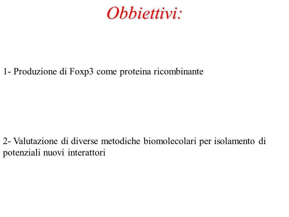 Obbiettivi: 1- Produzione di Foxp3 come proteina ricombinante