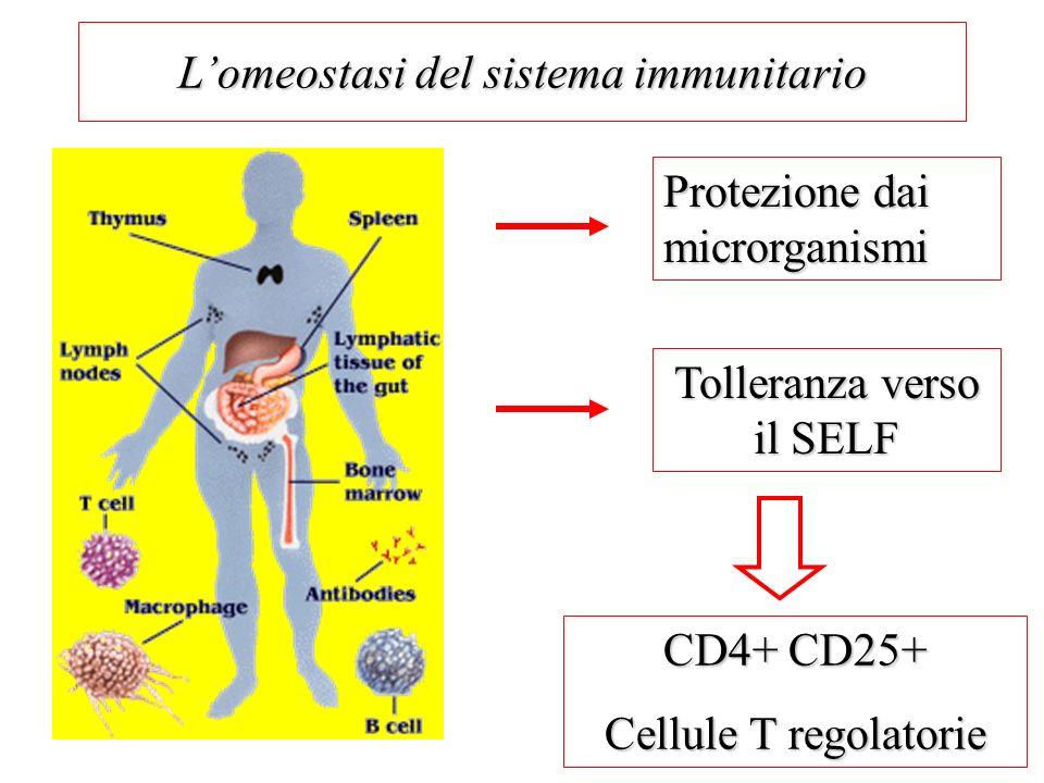 L'omeostasi del sistema immunitario