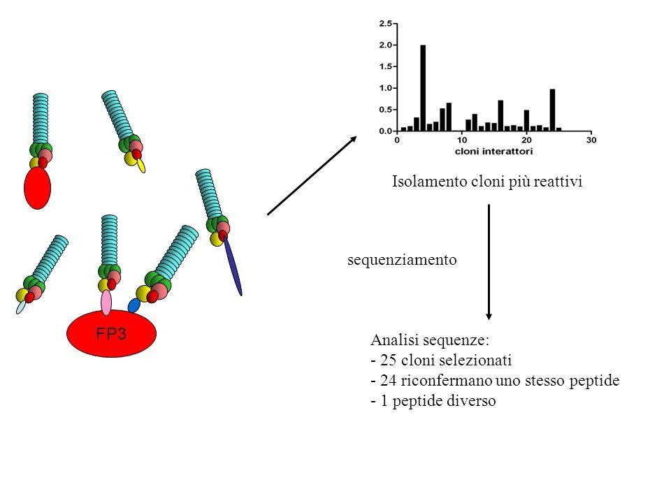 Isolamento cloni più reattivi
