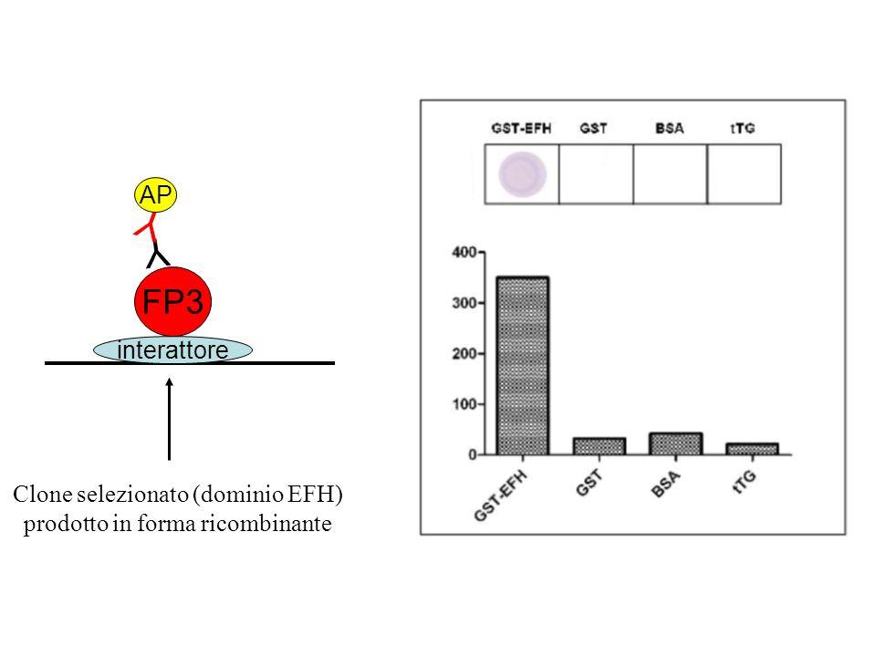Y Y FP3 AP interattore Clone selezionato (dominio EFH)