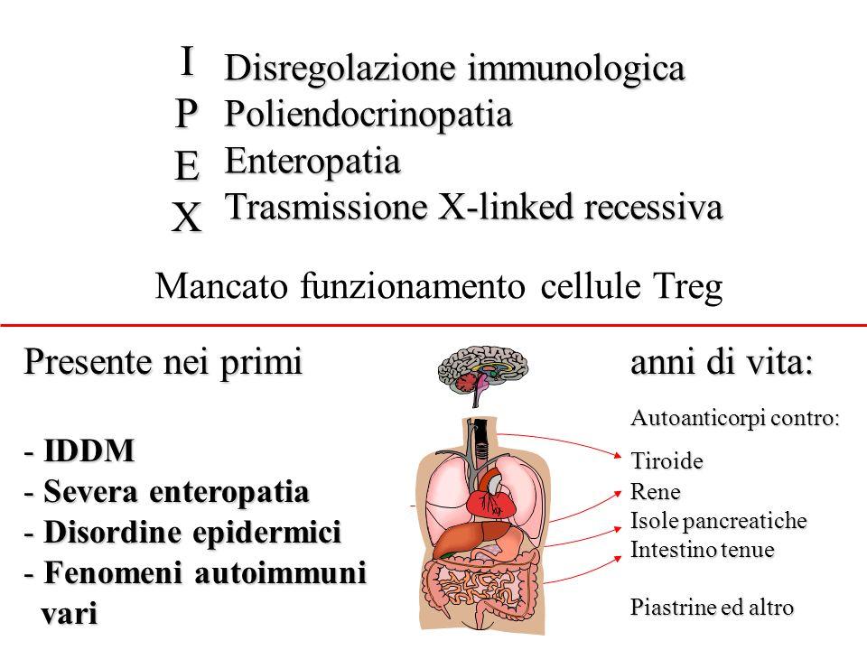 I P E X Disregolazione immunologica Poliendocrinopatia Enteropatia