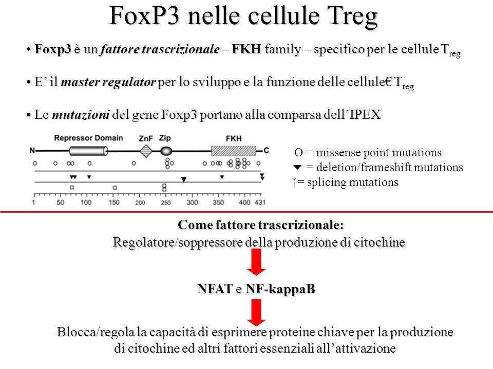 FoxP3 nelle cellule Treg