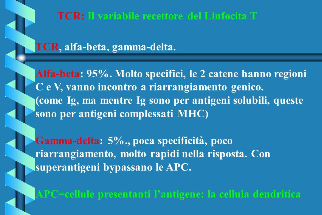 TCR: Il variabile recettore del Linfocita T