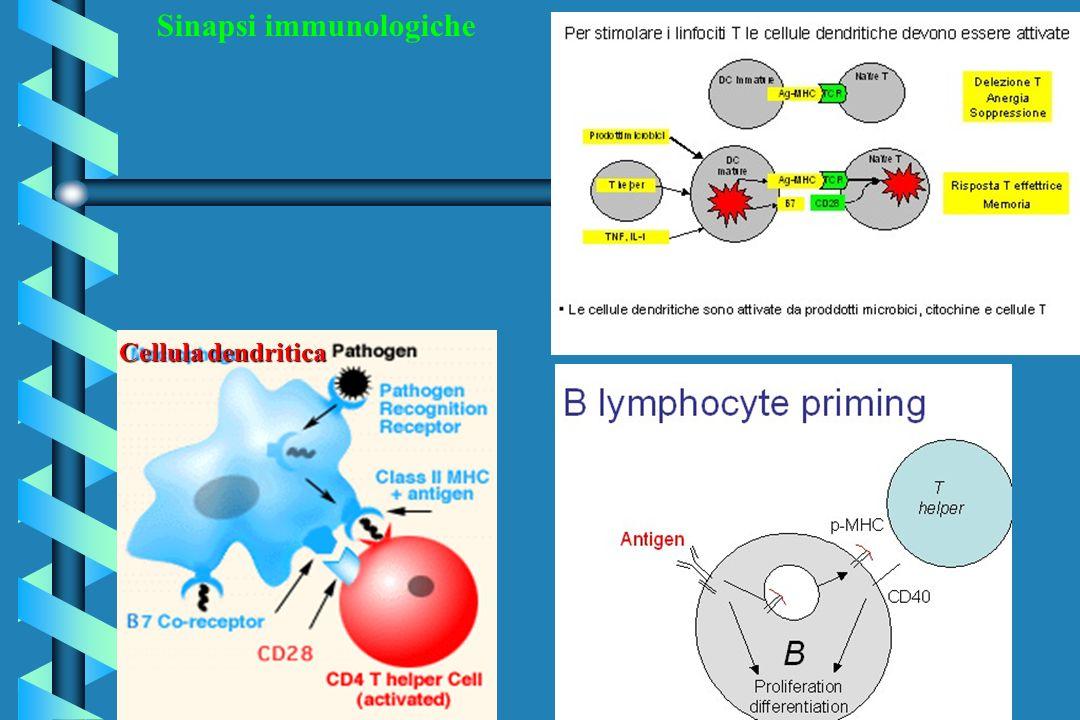 Sinapsi immunologiche