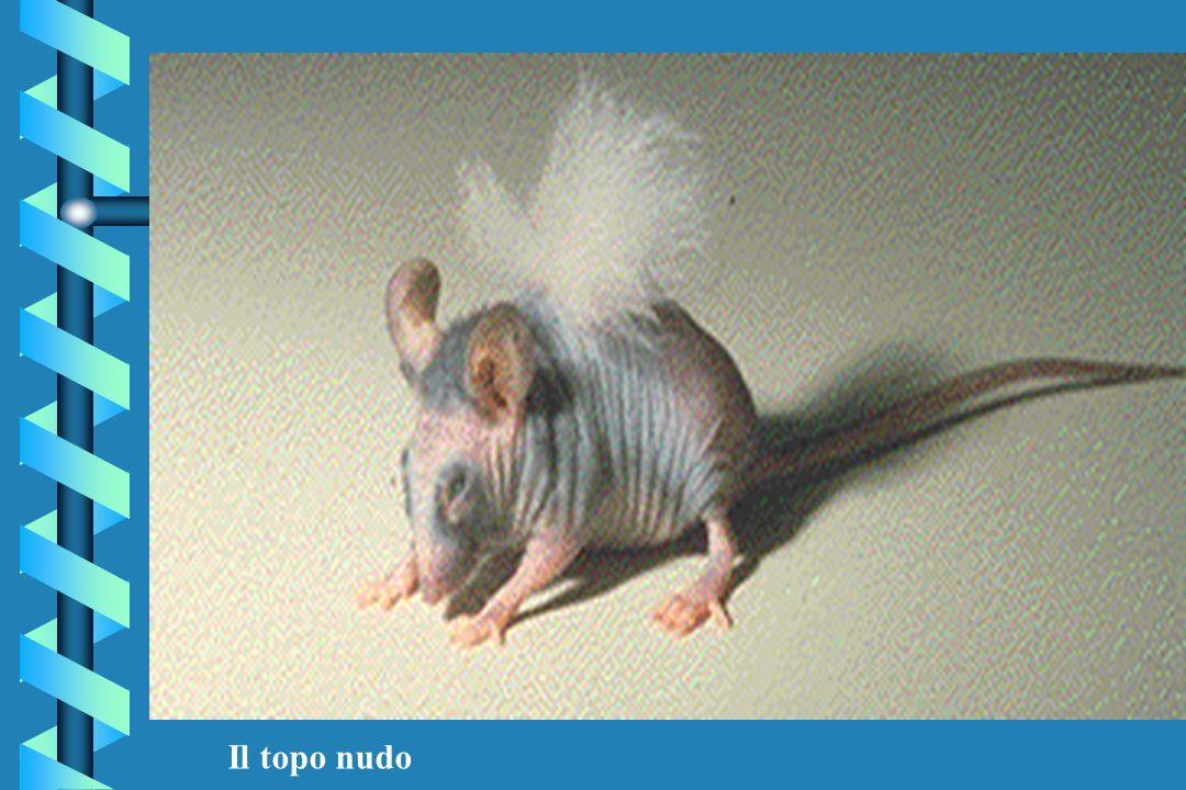 Il topo nudo
