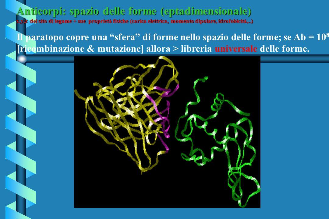 Anticorpi: spazio delle forme (eptadimensionale)