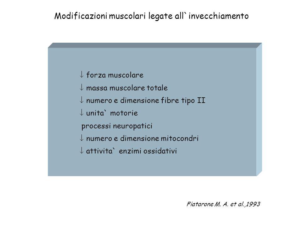 Modificazioni muscolari legate all`invecchiamento