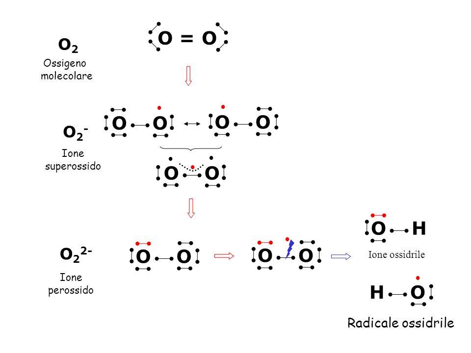O = O O O O O O O O H O O O O H O O2 O2- O22- Radicale ossidrile
