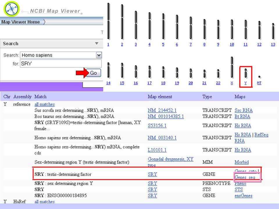 Map Viewer permette di visualizzare e cercare il genoma completo di un organismo, visualizzare la mappa cromosomica, e ingrandire progressivamente in maggiori livelli di dettaglio, fino alla sequenza di una regione interessata.