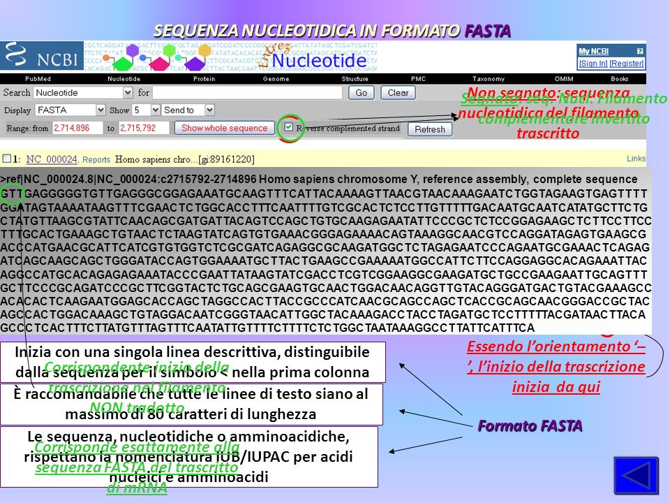 SEQUENZA NUCLEOTIDICA IN FORMATO FASTA