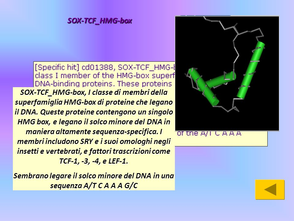 SOX-TCF_HMG-box