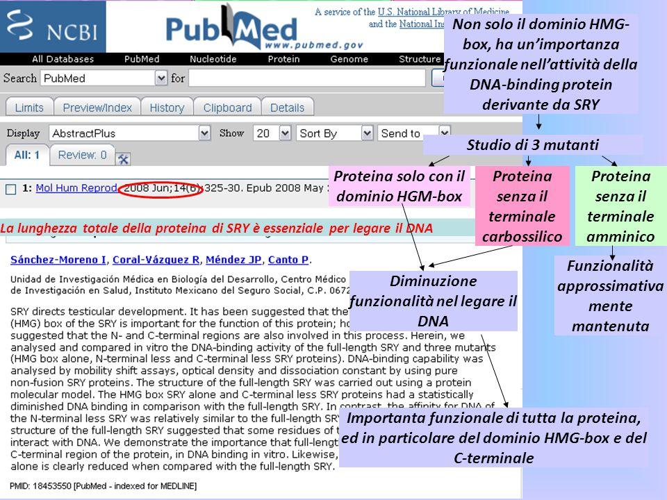 Proteina solo con il dominio HGM-box