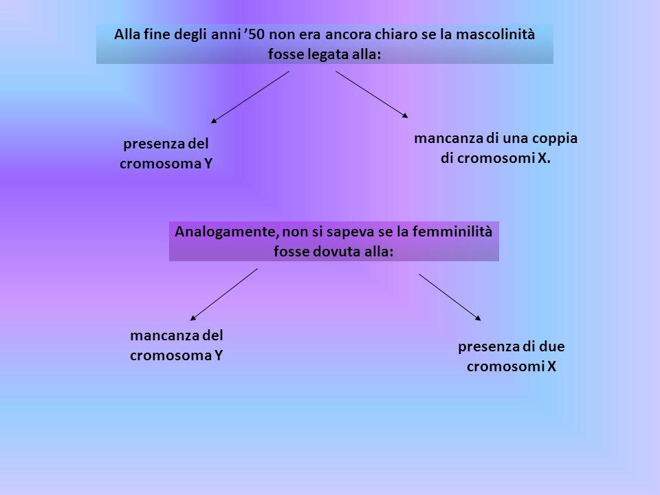 mancanza di una coppia di cromosomi X. presenza del cromosoma Y
