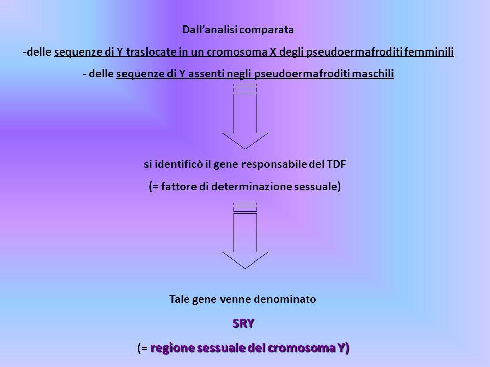SRY Dall'analisi comparata