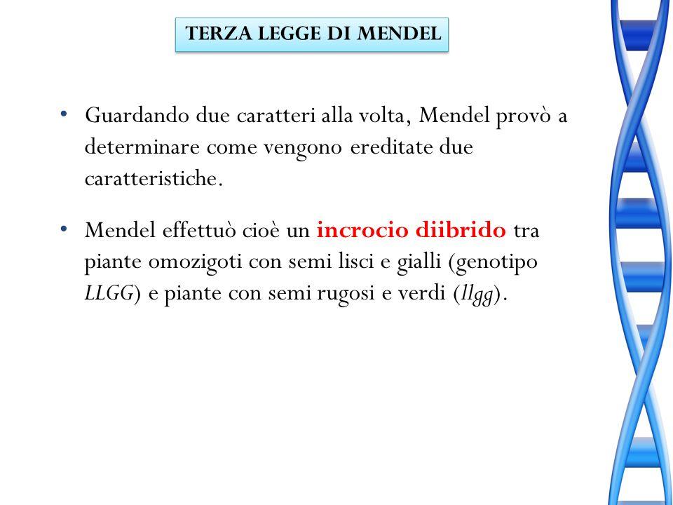 TERZA LEGGE DI MENDELGuardando due caratteri alla volta, Mendel provò a determinare come vengono ereditate due caratteristiche.