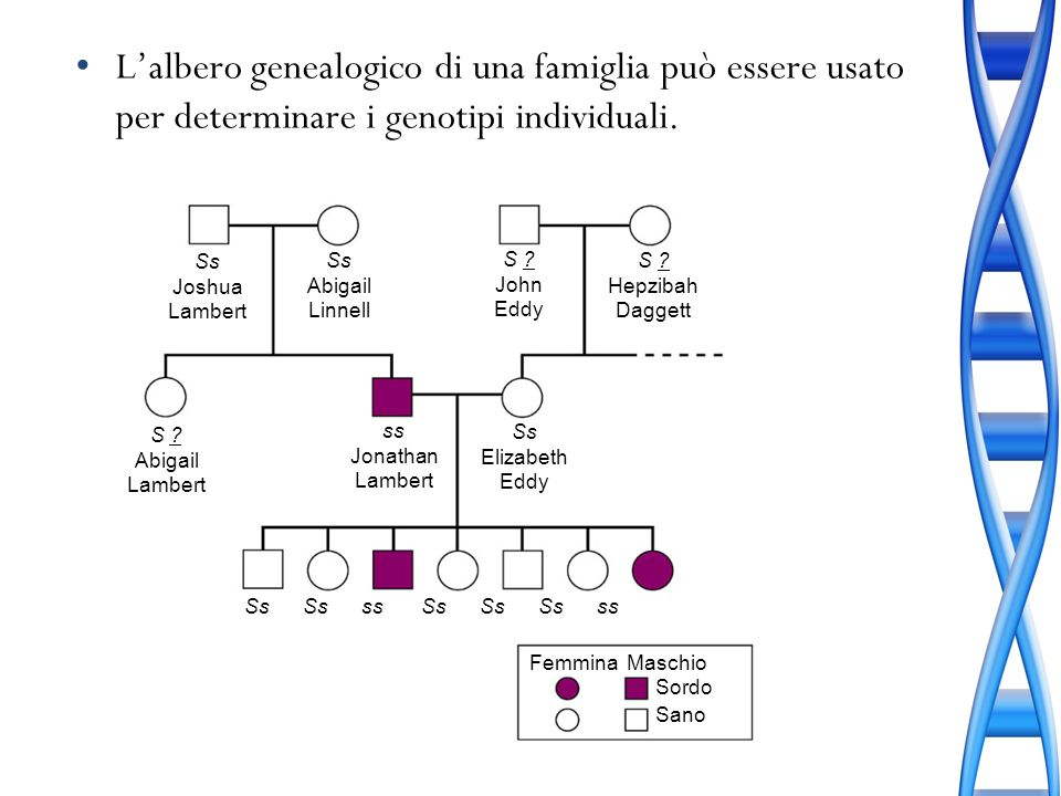 L'albero genealogico di una famiglia può essere usato per determinare i genotipi individuali.