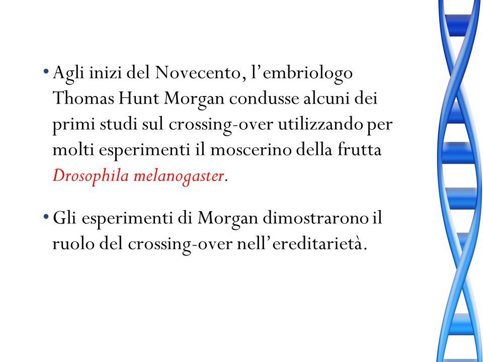 Agli inizi del Novecento, l'embriologo Thomas Hunt Morgan condusse alcuni dei primi studi sul crossing-over utilizzando per molti esperimenti il moscerino della frutta Drosophila melanogaster.