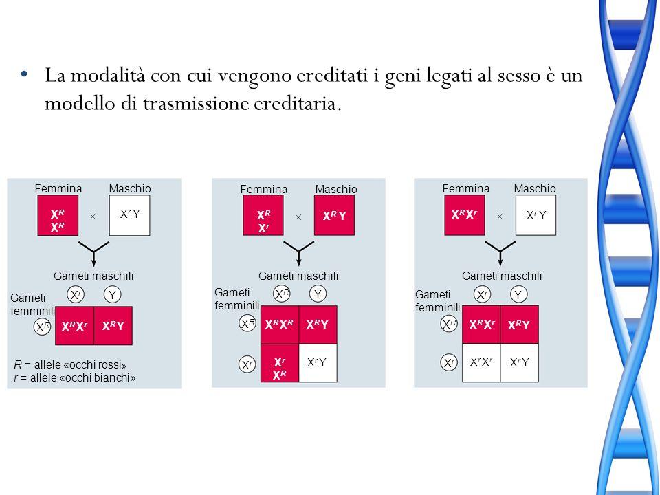 La modalità con cui vengono ereditati i geni legati al sesso è un modello di trasmissione ereditaria.