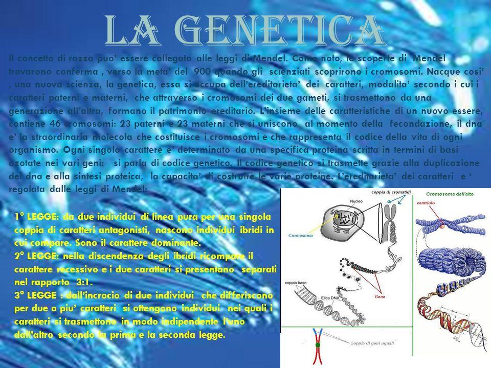 LA GENETICA LA GENETICA