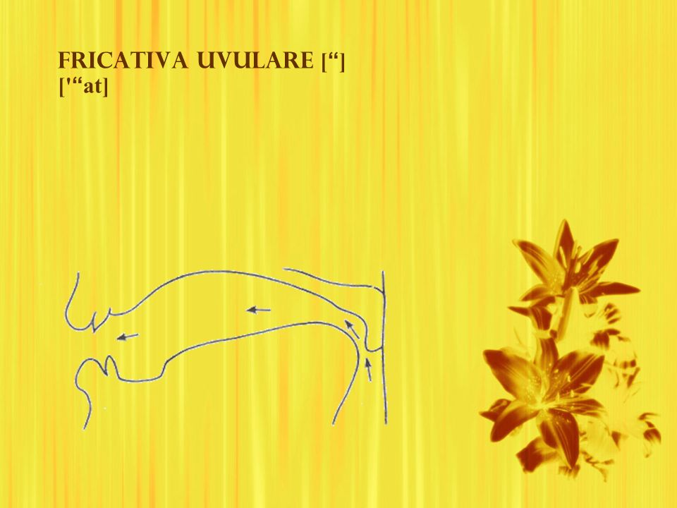Fricativa uvulare [ ] [ at]
