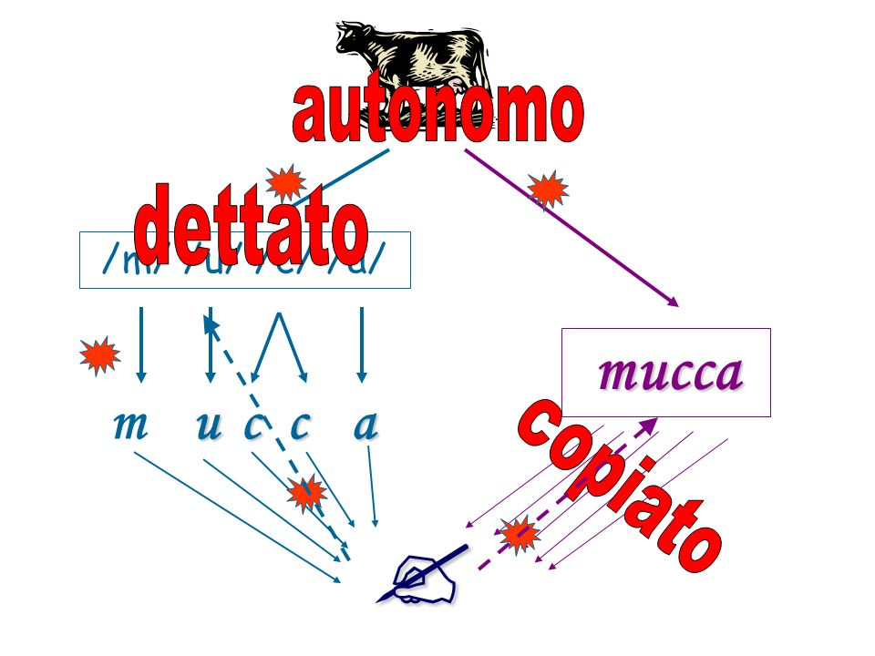 autonomo dettato /m/ /u/ /c/ /a/ mucca m u c c a copiato