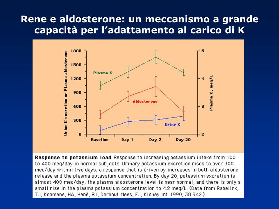 Rene e aldosterone: un meccanismo a grande capacità per l'adattamento al carico di K