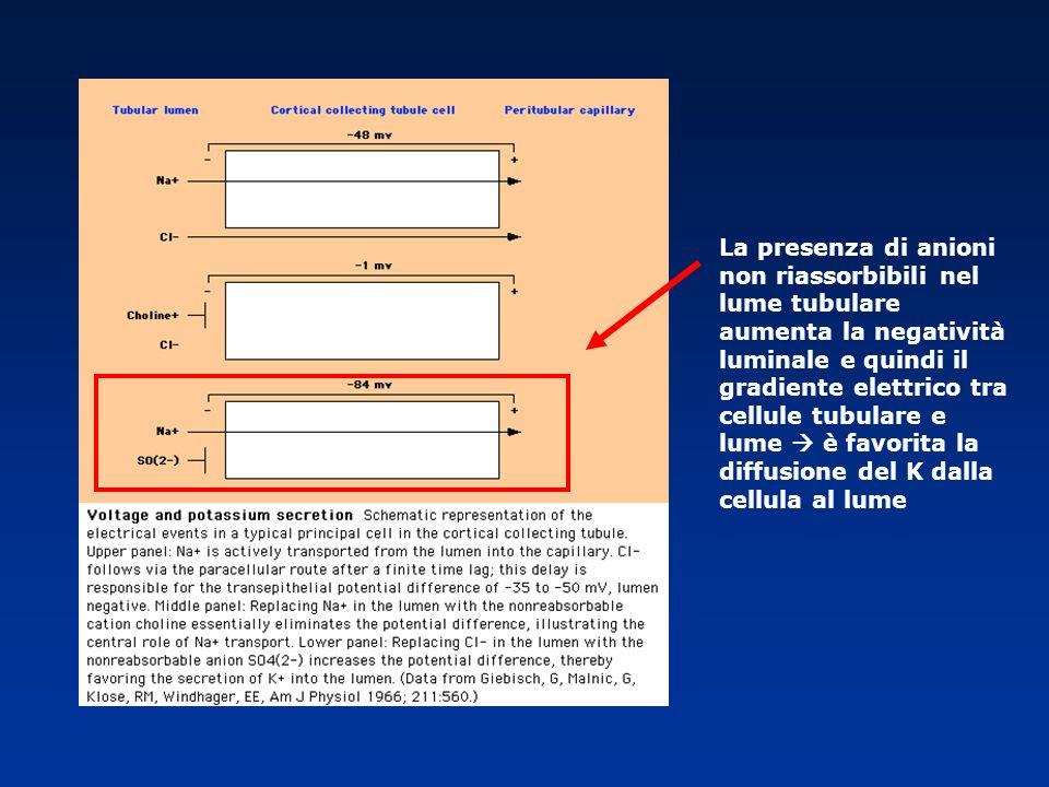 La presenza di anioni non riassorbibili nel lume tubulare aumenta la negatività luminale e quindi il gradiente elettrico tra cellule tubulare e lume  è favorita la diffusione del K dalla cellula al lume