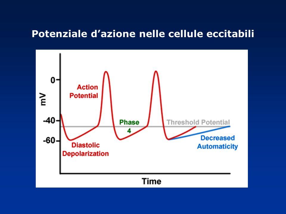 Potenziale d'azione nelle cellule eccitabili