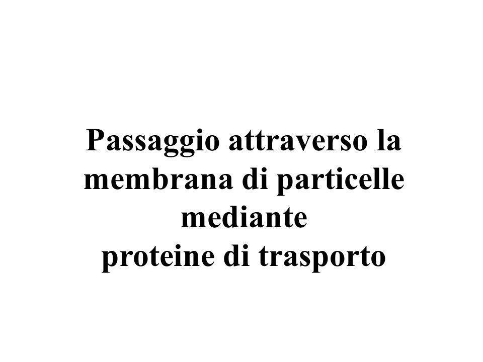 Passaggio attraverso la membrana di particelle mediante