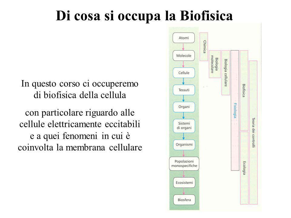 Di cosa si occupa la Biofisica