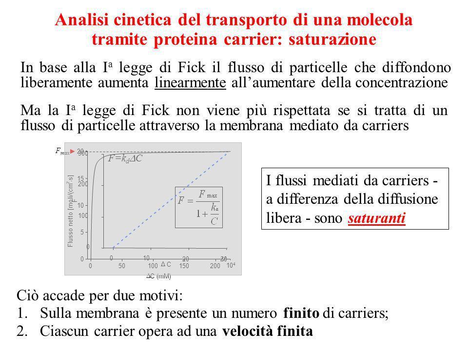 Analisi cinetica del transporto di una molecola tramite proteina carrier: saturazione