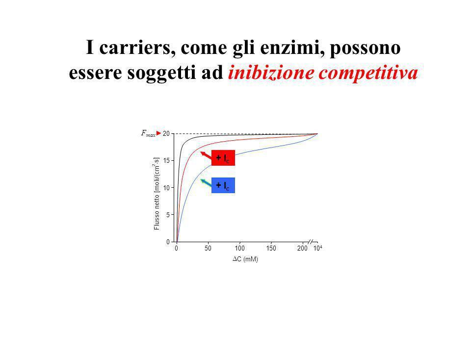 I carriers, come gli enzimi, possono essere soggetti ad inibizione competitiva