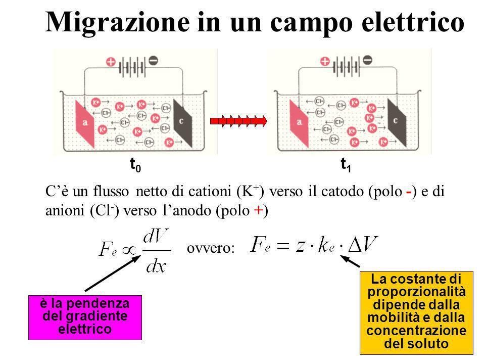 Migrazione in un campo elettrico