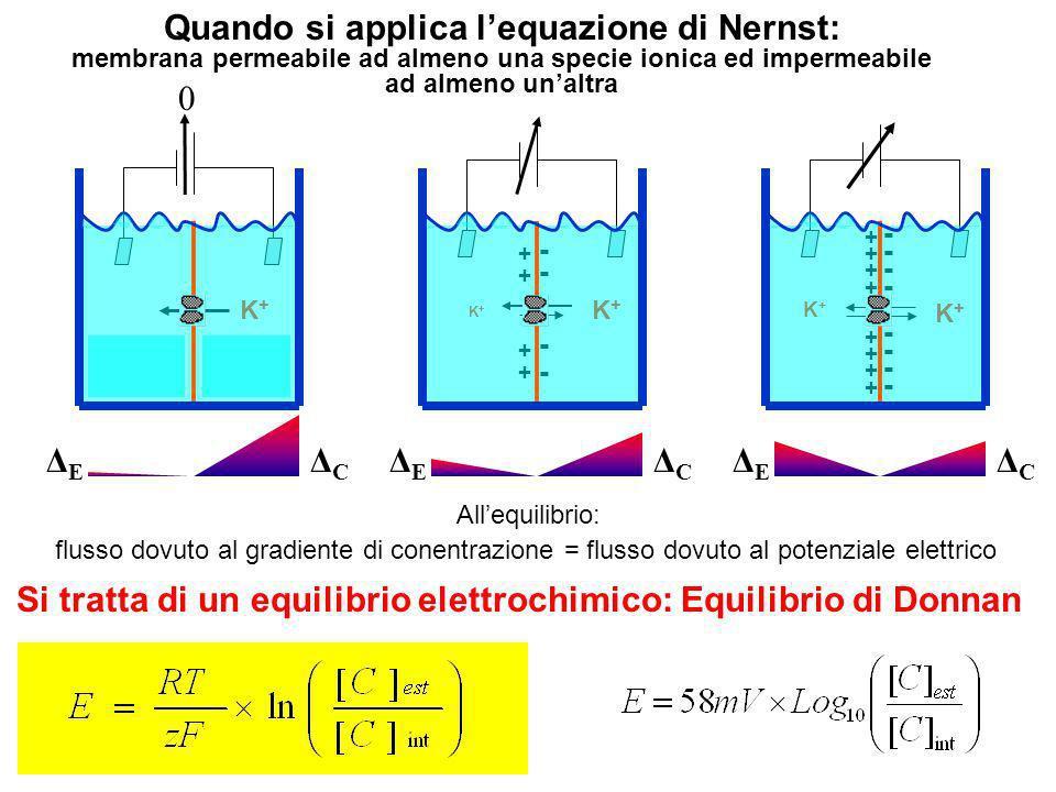 Quando si applica l'equazione di Nernst: