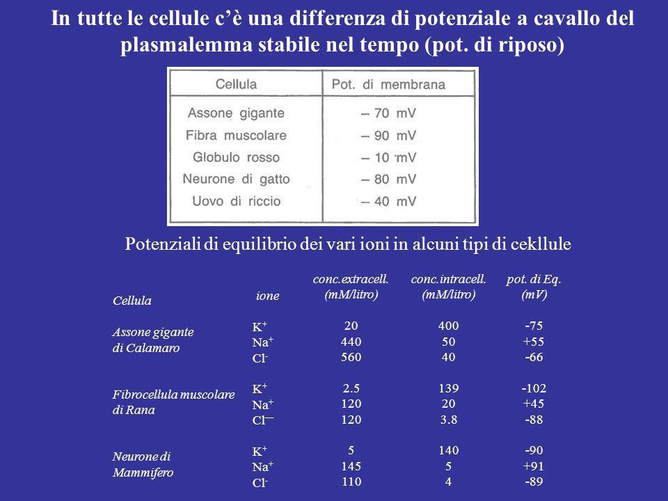 Potenziali di equilibrio dei vari ioni in alcuni tipi di cekllule