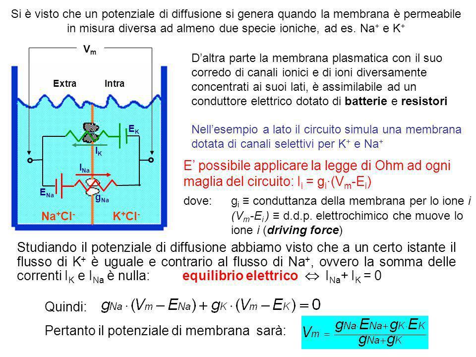 Pertanto il potenziale di membrana sarà: