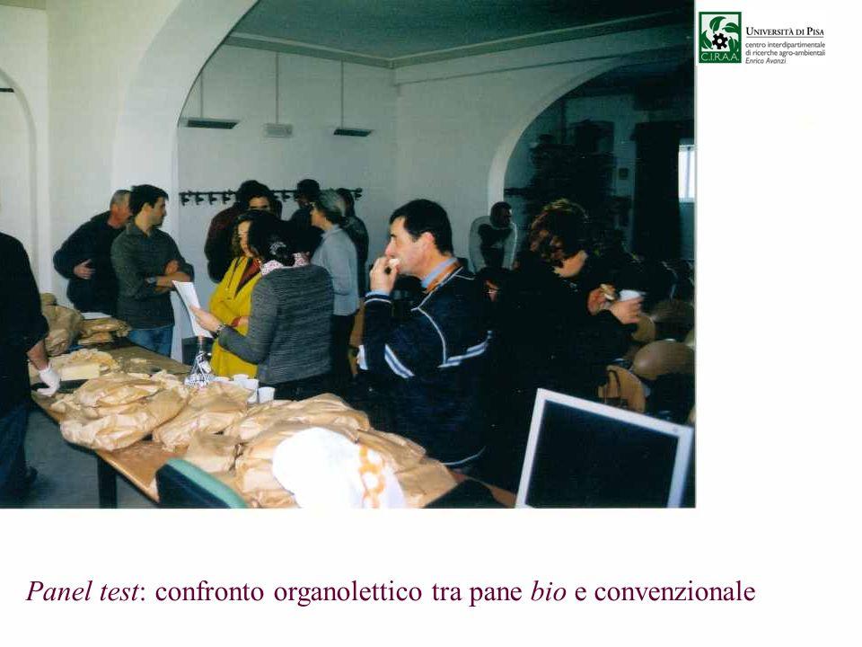 Panel test: confronto organolettico tra pane bio e convenzionale