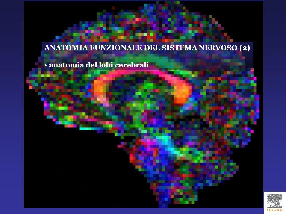 ANATOMIA FUNZIONALE DEL SISTEMA NERVOSO (2)
