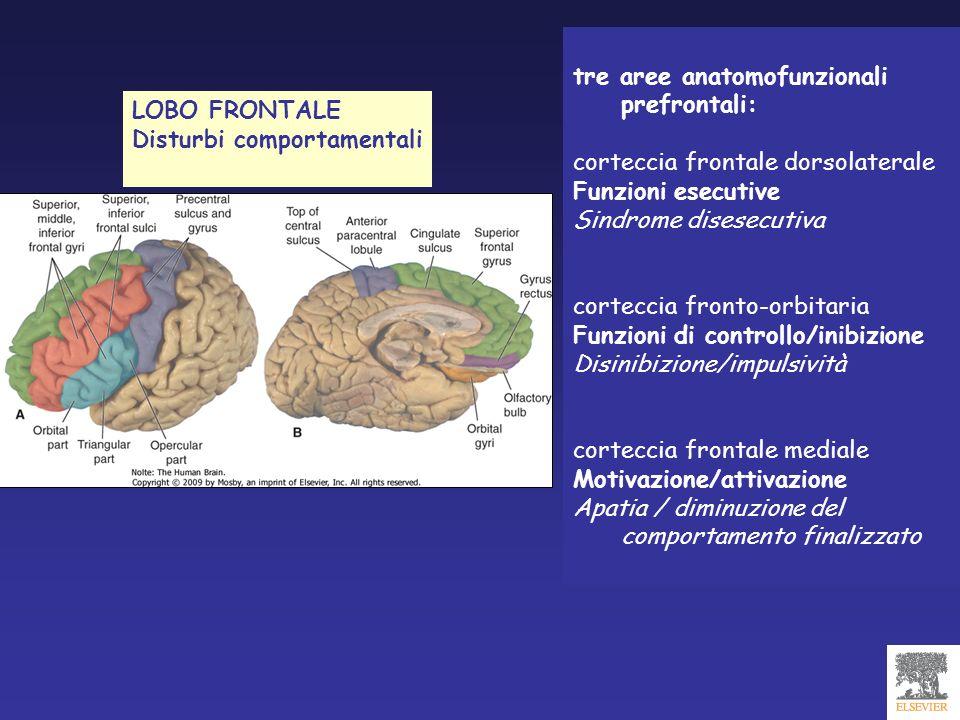 tre aree anatomofunzionali prefrontali: