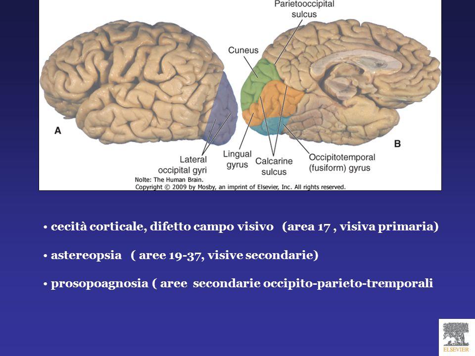 cecità corticale, difetto campo visivo (area 17 , visiva primaria)