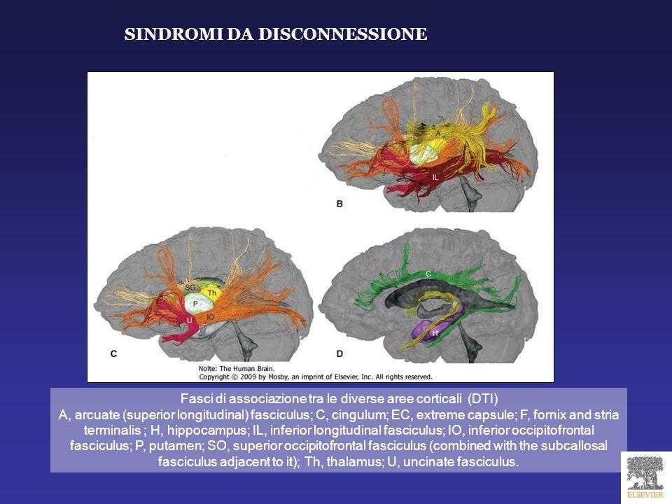 Fasci di associazione tra le diverse aree corticali (DTI)