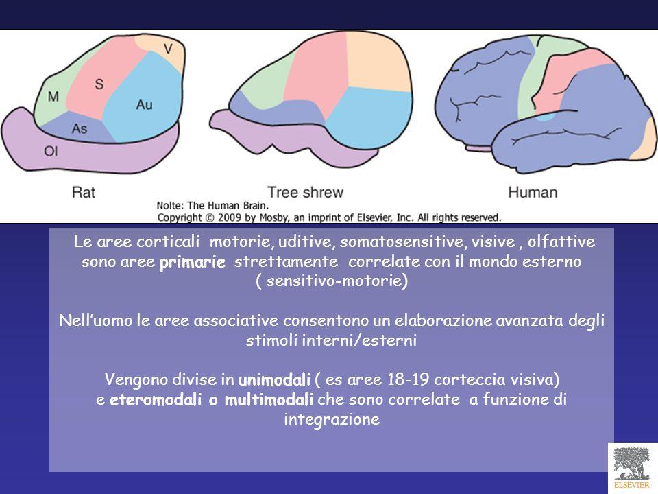 Vengono divise in unimodali ( es aree 18-19 corteccia visiva)