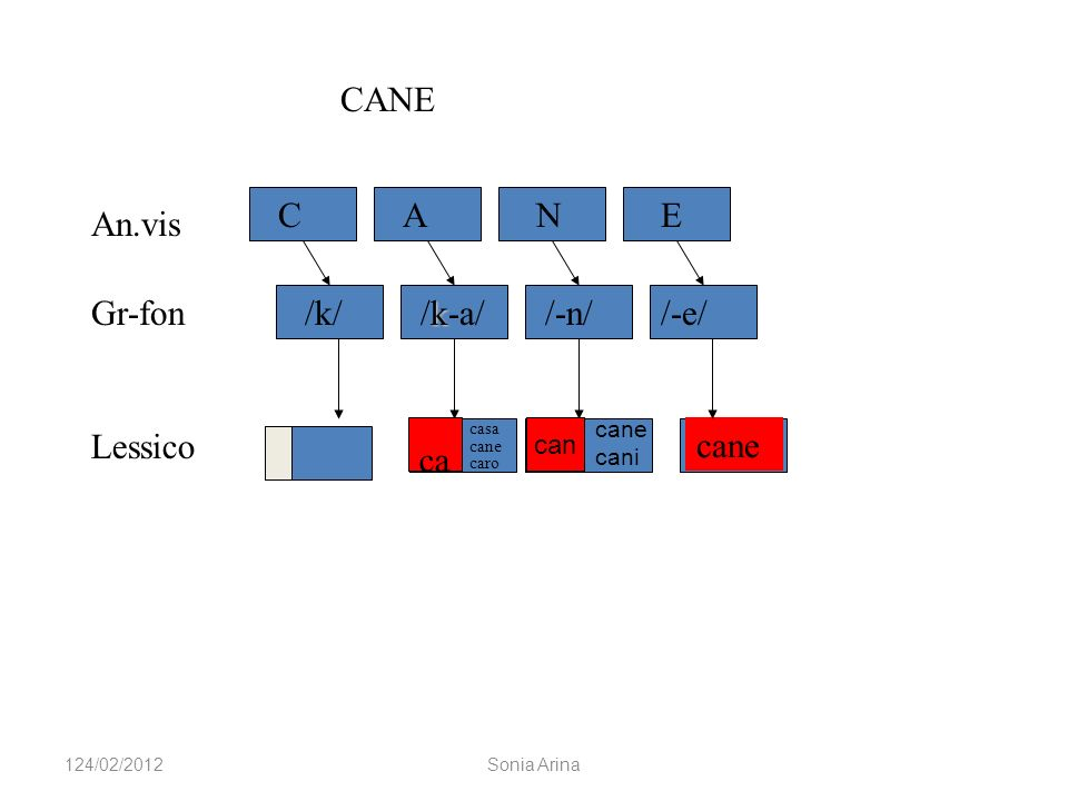 CANE C A N E An.vis Gr-fon /k/ /k-a/ /-n/ /-e/ Lessico ca cane can