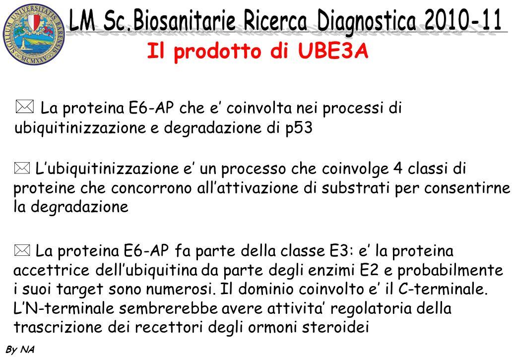 Il prodotto di UBE3A La proteina E6-AP che e' coinvolta nei processi di ubiquitinizzazione e degradazione di p53.