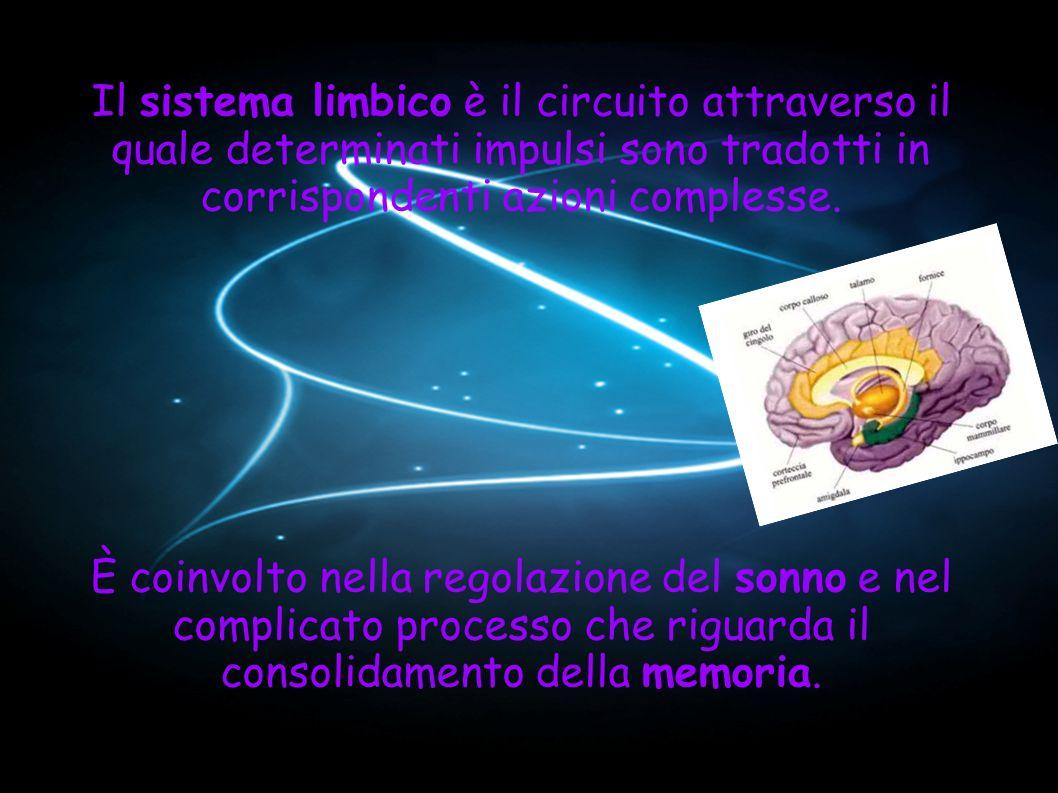 Il sistema limbico è il circuito attraverso il quale determinati impulsi sono tradotti in corrispondenti azioni complesse.