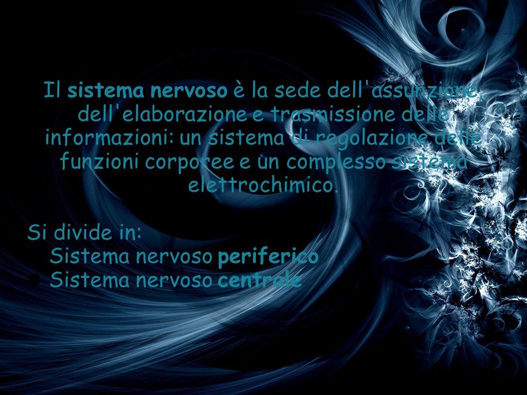 Il sistema nervoso è la sede dell assunzione, dell elaborazione e trasmissione delle informazioni: un sistema di regolazione delle funzioni corporee e un complesso sistema elettrochimico.