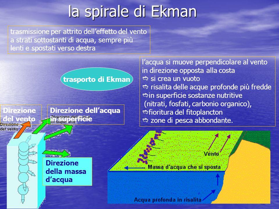 la spirale di Ekman Direzione del vento Direzione dell'acqua