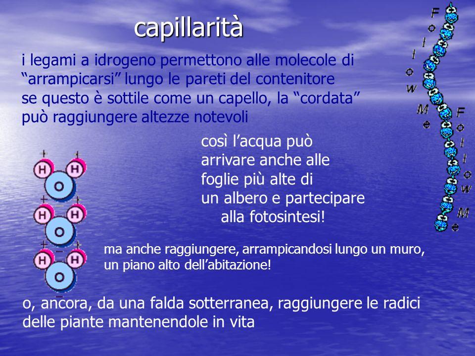 capillarità i legami a idrogeno permettono alle molecole di